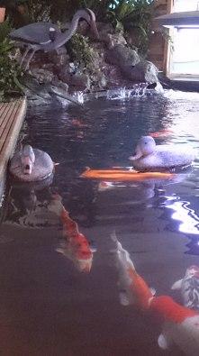 Ducks well plastic ducks